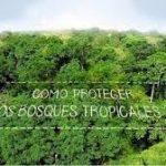 imagen video cómo proteger los bosques