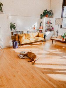 suelo de madera con perro