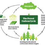 bosques ciclo del carbono